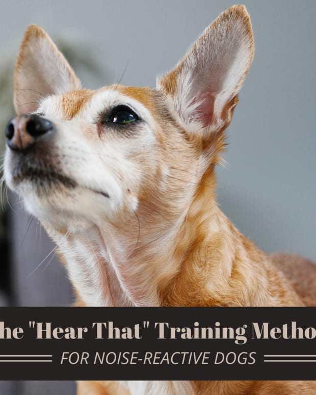 dog-noise-sensitivity-how-to-help-a-dog-reactive-to-noises
