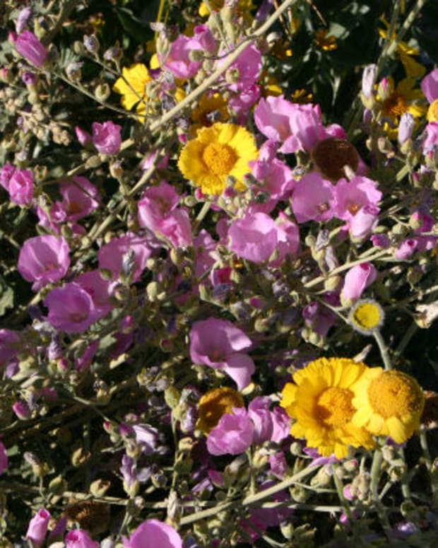 native-wildflowers-cold-climates
