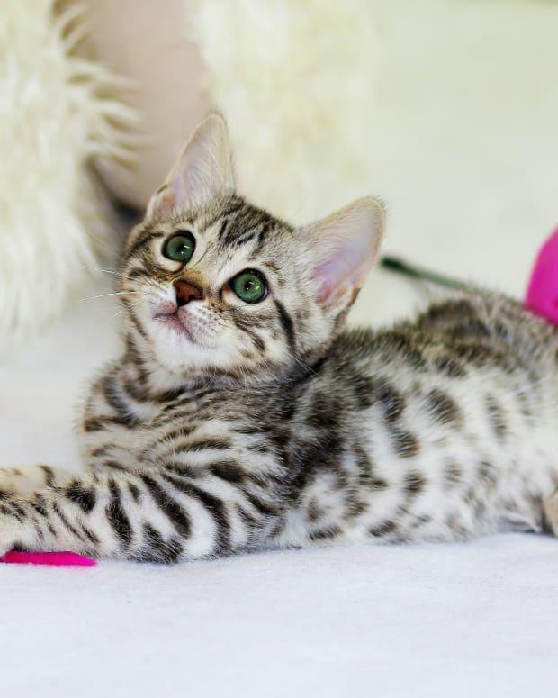 funny-unique-and-cute-cat-names