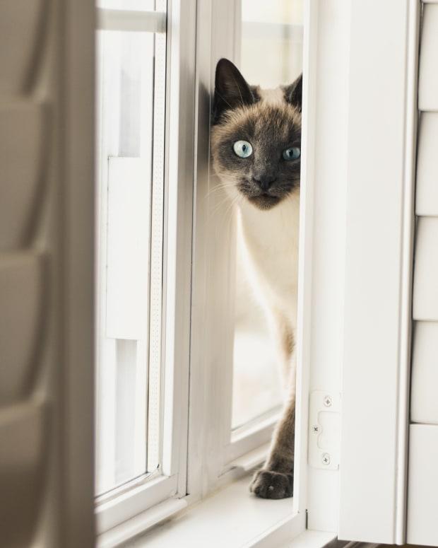 solve-cat-behavior-problems