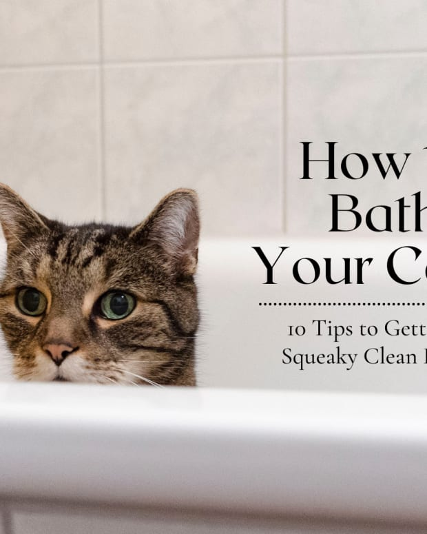 10-tips-to-succesfully-bathe-your-cat-without-dying-in-the-process