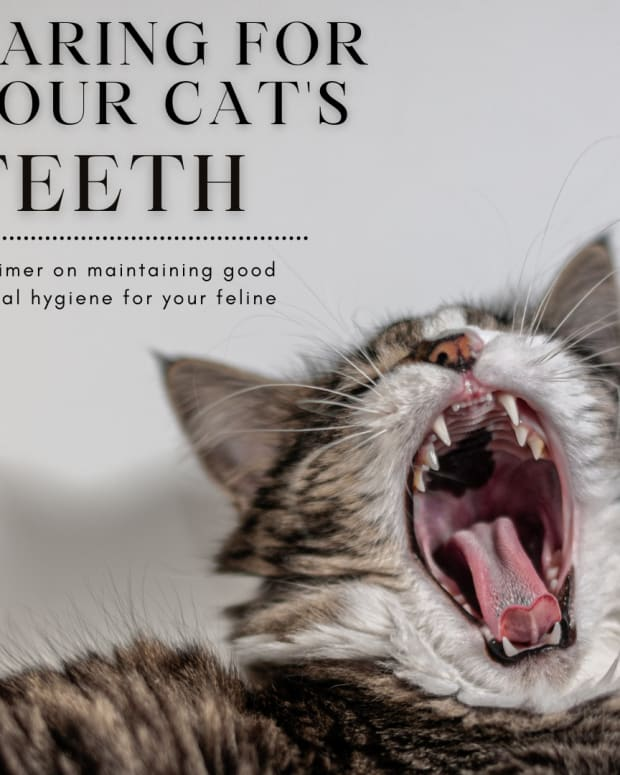 the-necessity-of-keeping-your-cats-teeth-clean