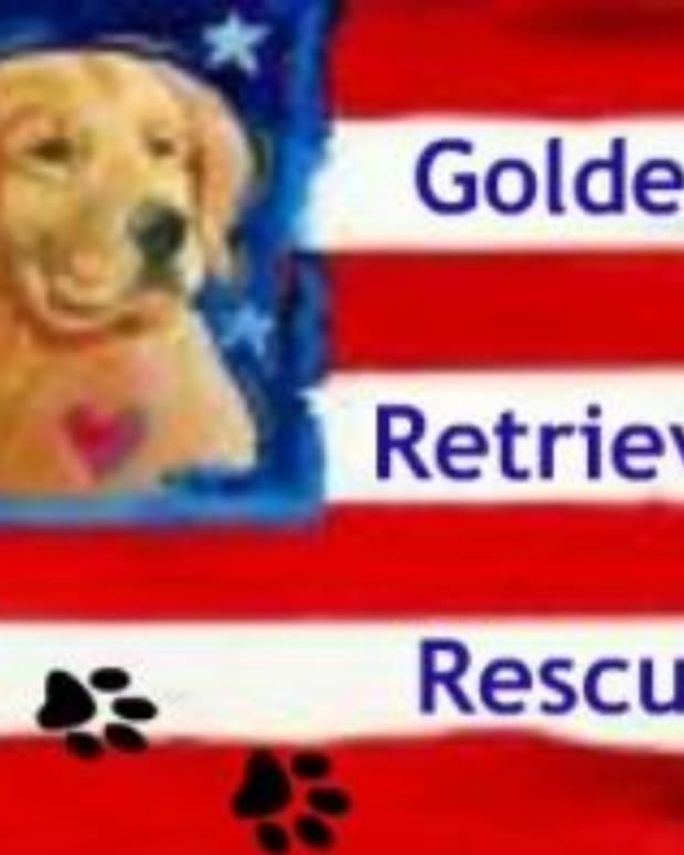 golden-retriever-rescue-usa