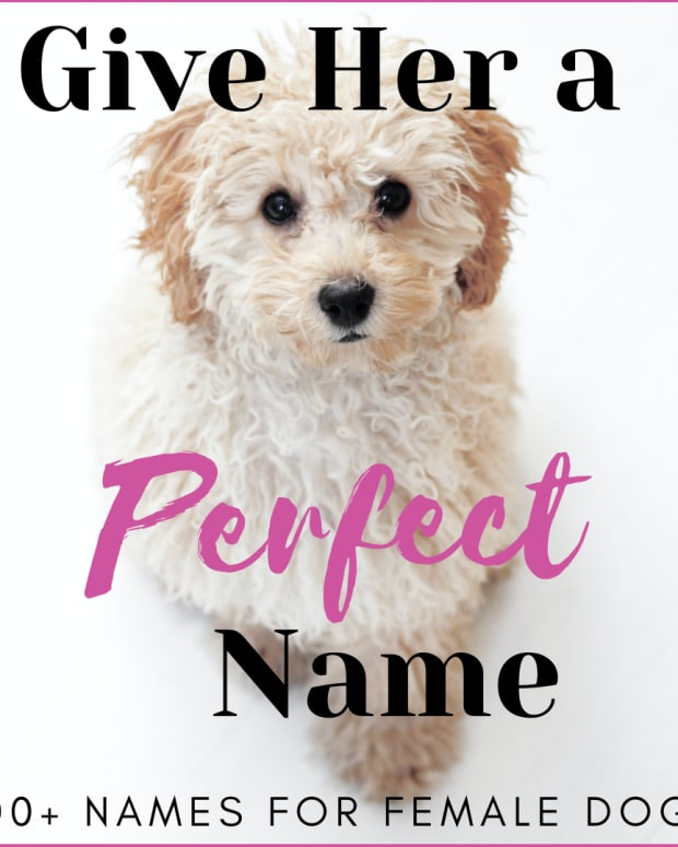 girl-dog-names