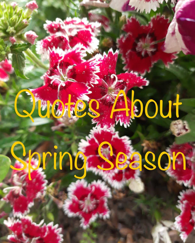 21-quotes-to-celebrate-the-spring-season