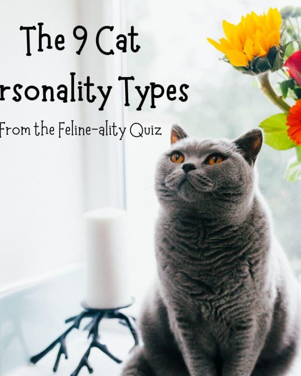 cat-personalities-felineality