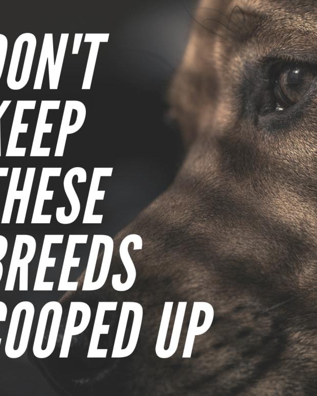 popular-dog-breeds-you-should-avoid