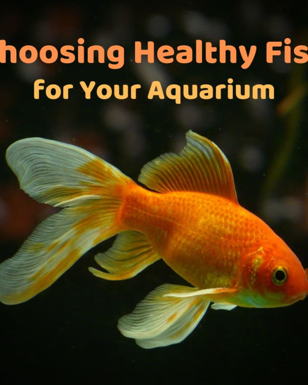 choosing-healthy-fish