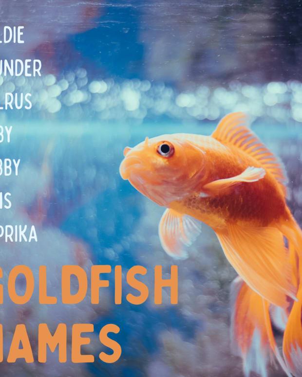 goldfish-names