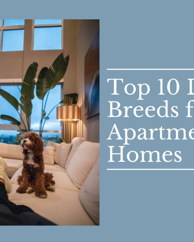 10-best-dog-breeds-for-apartment-living