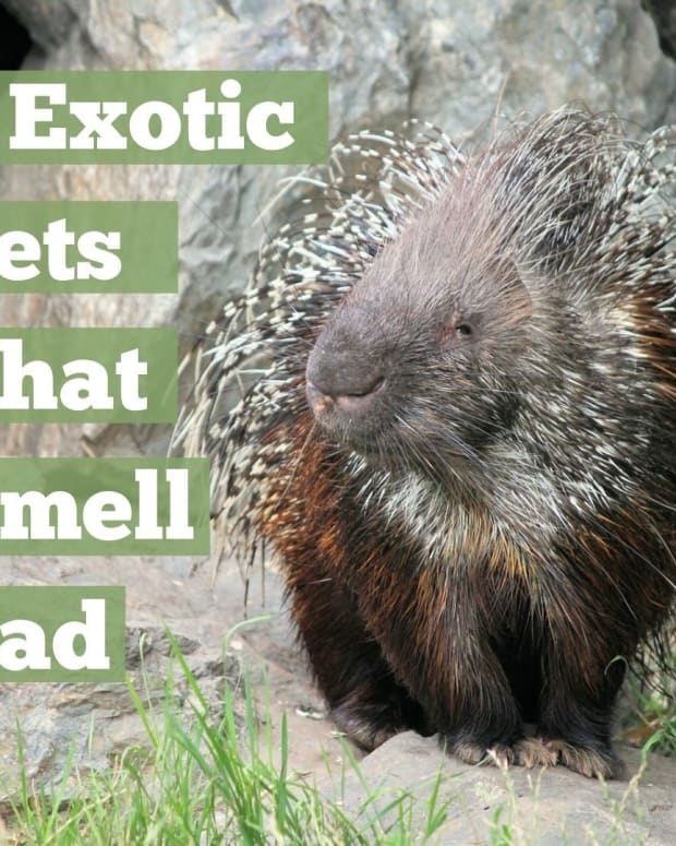 8-exotic-pets-that-stink