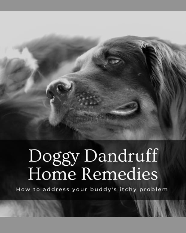 dog-home-remedies-for-dandruff
