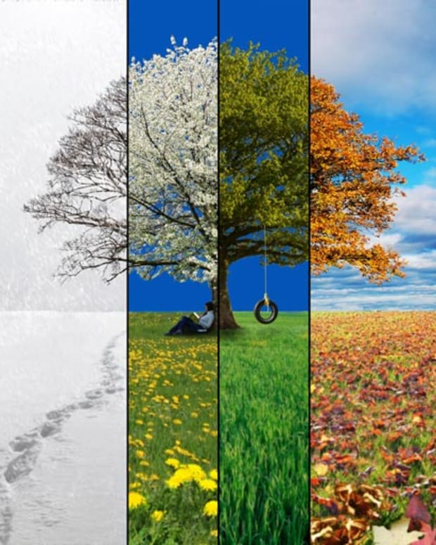 in-the-4-seasons