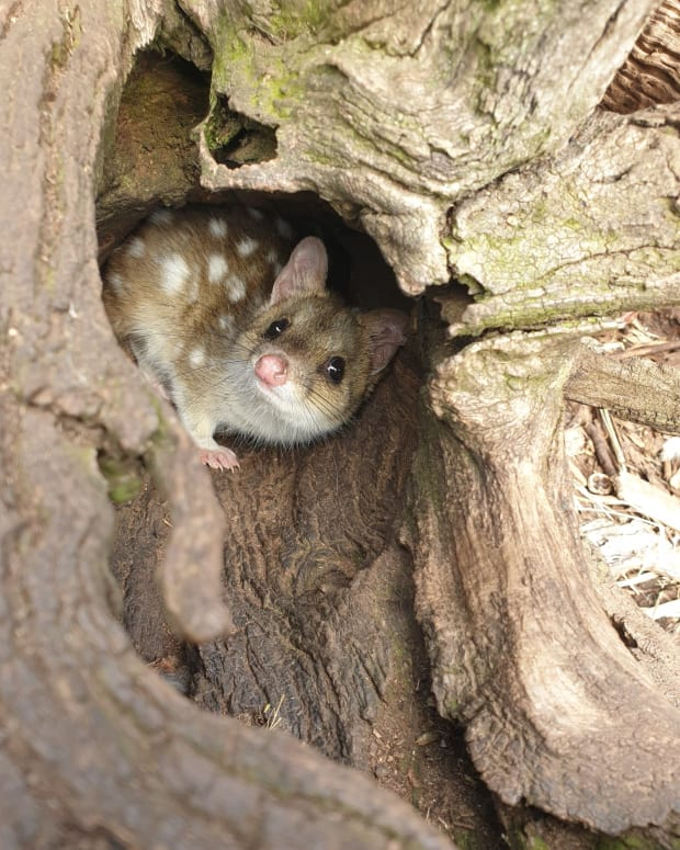 a-visit-to-truwunna-wildlife-sanctuary
