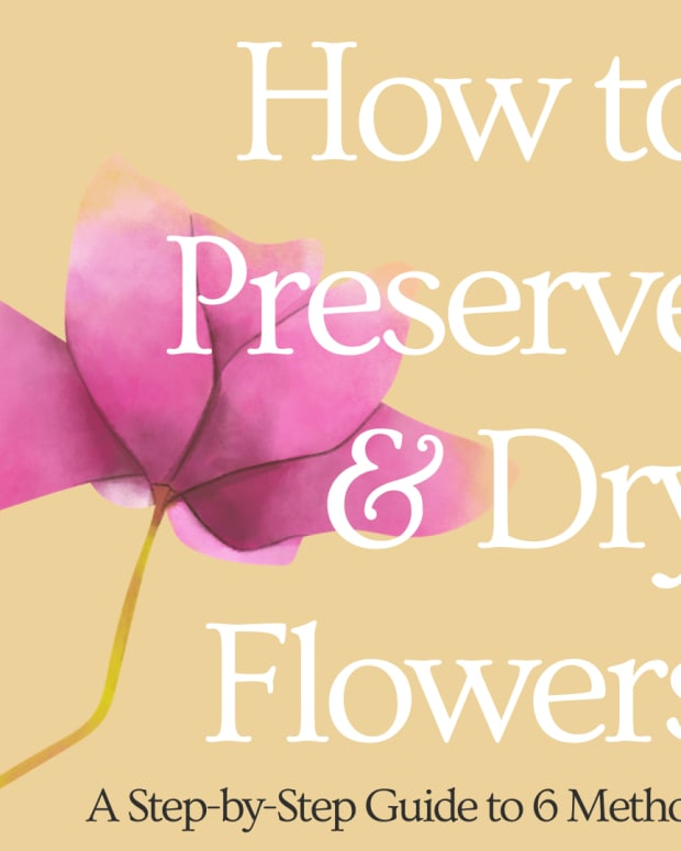 preserving-flowers-six-ways-of-drying-flowers