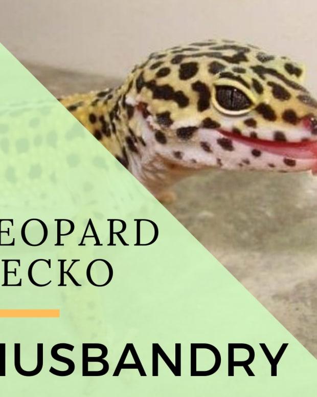 set-up-a-leopard-gecko-enclosure