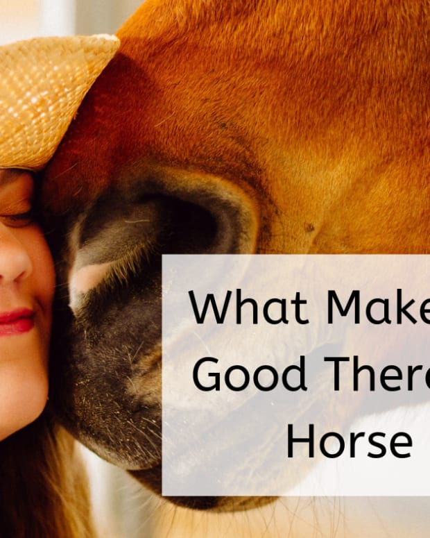would-your-horse-make-a-good-therapy-horse