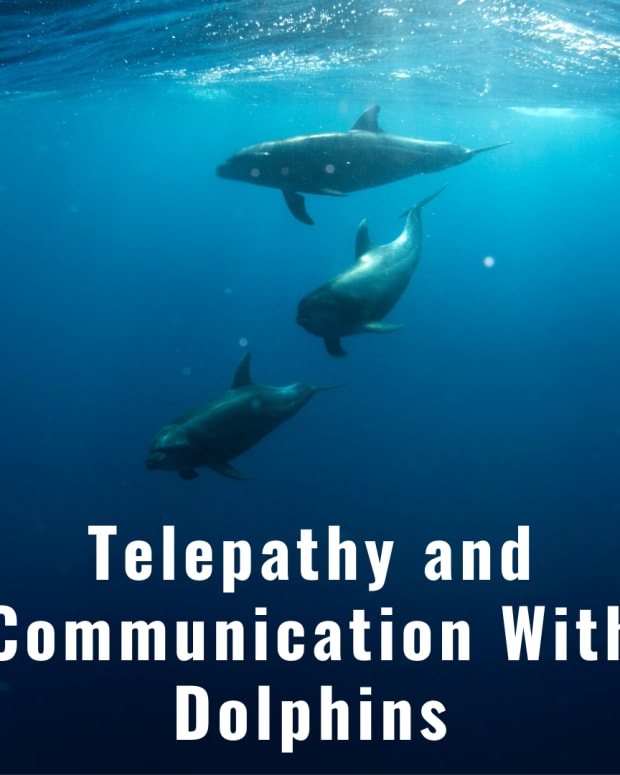 communication-with-dolphins-telempathy