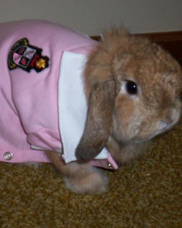 bunny-care-guide-can-bunnies-wear-clothes