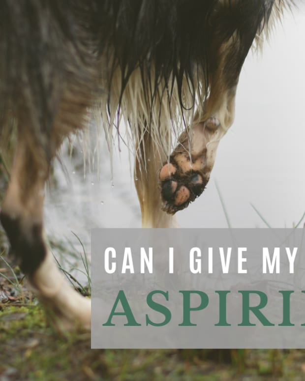 giving-aspirin-to-your-dog