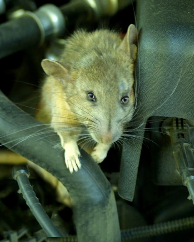 mice-in-your-motor