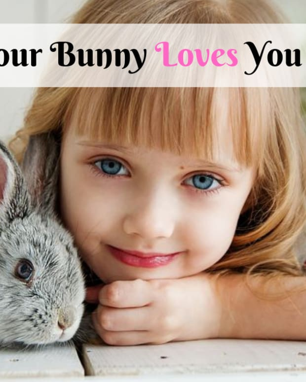 bunny-love-how-to-tell-if-your-bunny-loves-you