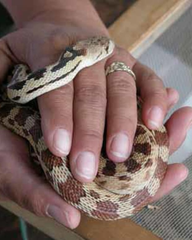 the-best-snakes-to-have-as-a-pet
