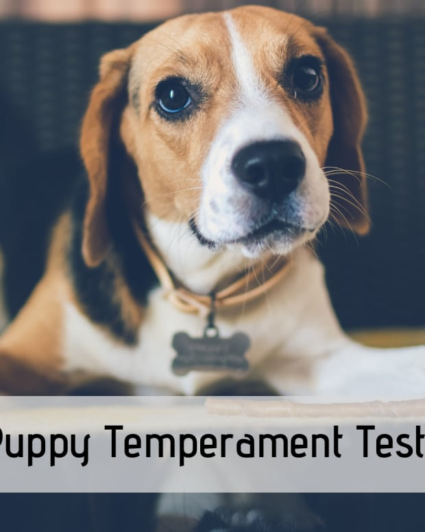 puppy-temperament-tests