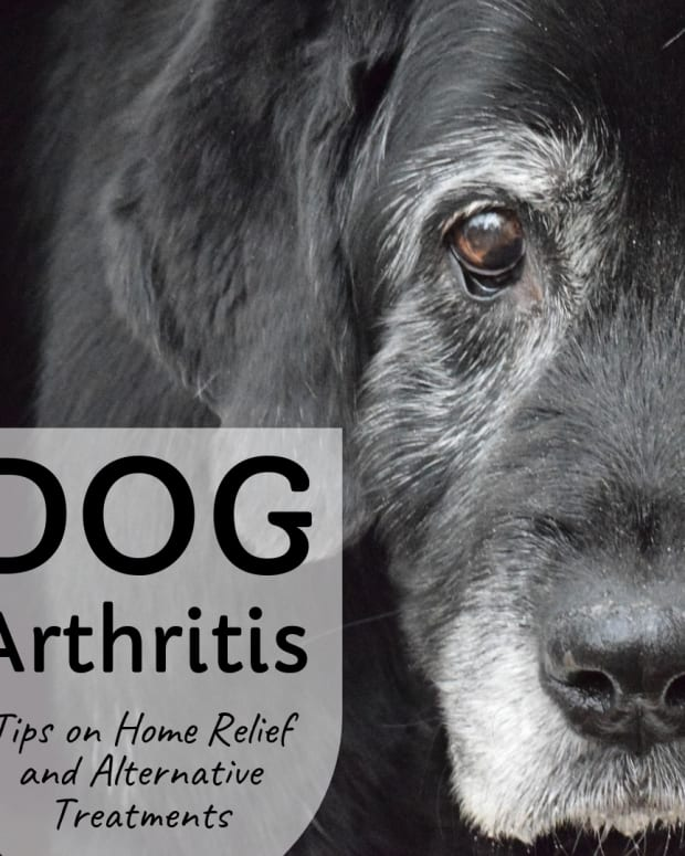 how-to-help-dogs-with-arthritis