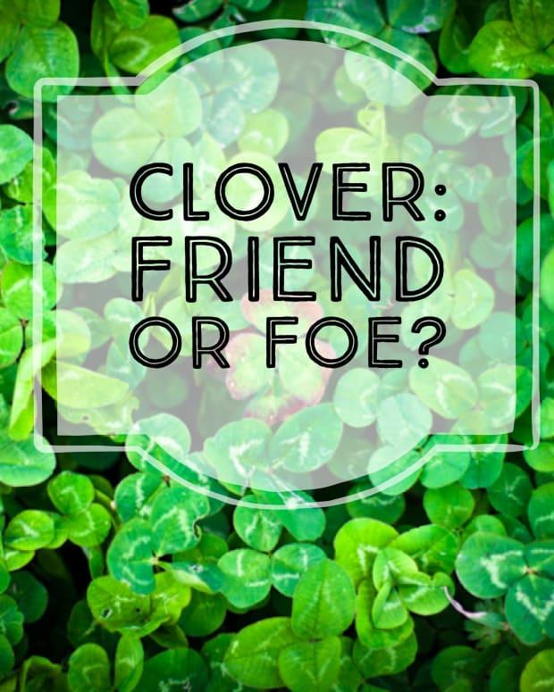 clover-lawns