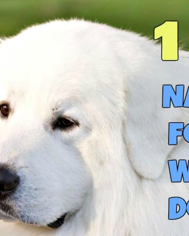 names-for-white-dogs
