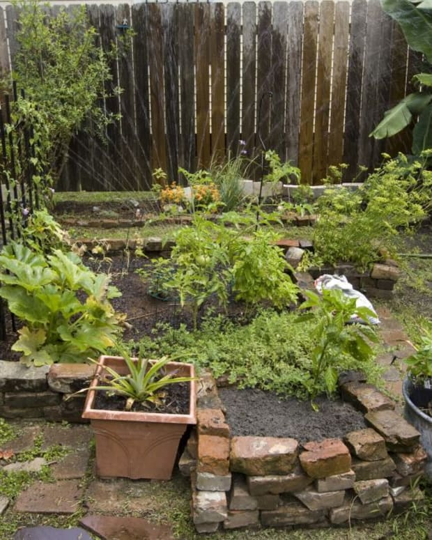 how-to-start-growing-your-witchs-garden