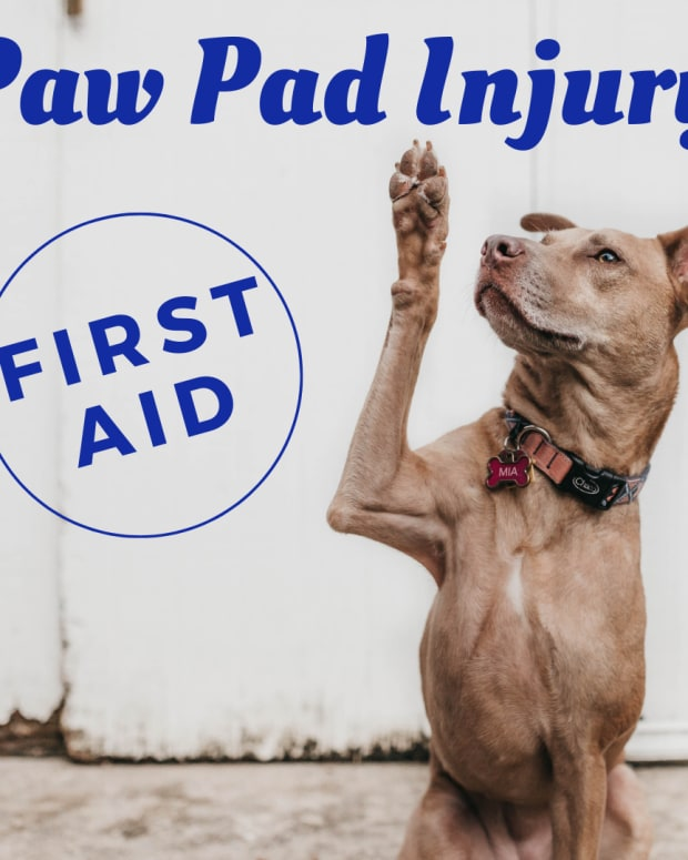 how-to-treat-a-dogs--paw-pad-injury