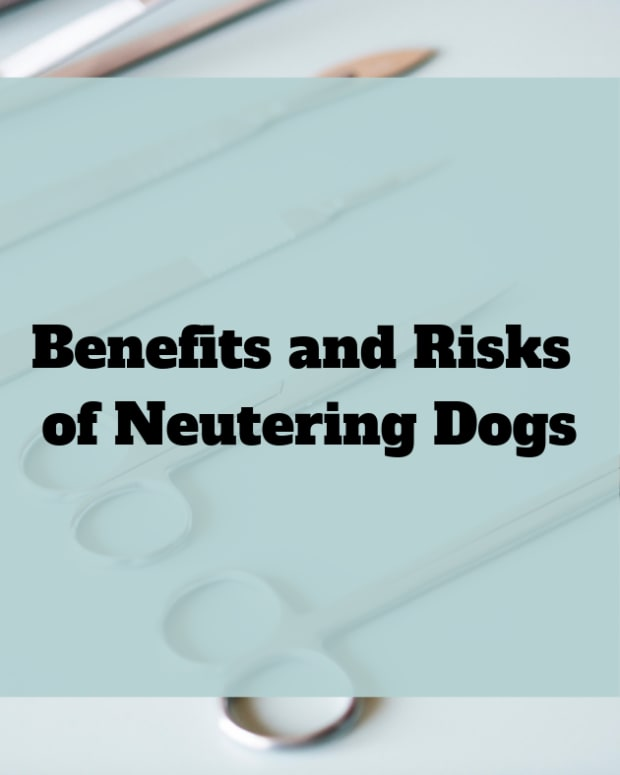 benefits-and-risks-of-neutering-dogs