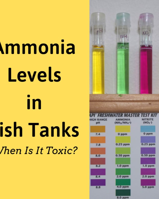the-truth-about-ammonia