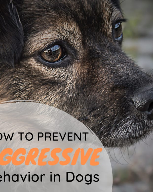 how-pet-owners-can-deal-with-dog-aggression