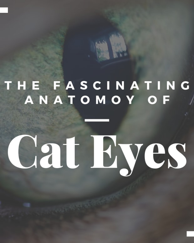 the-anatomy-of-a-cats-eye
