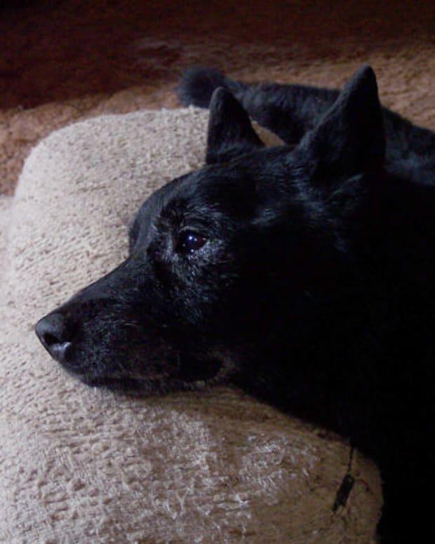 pet euthanasia, cohdra, morguefile.com