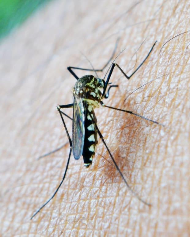 repelling-swarms-of-midges-flies