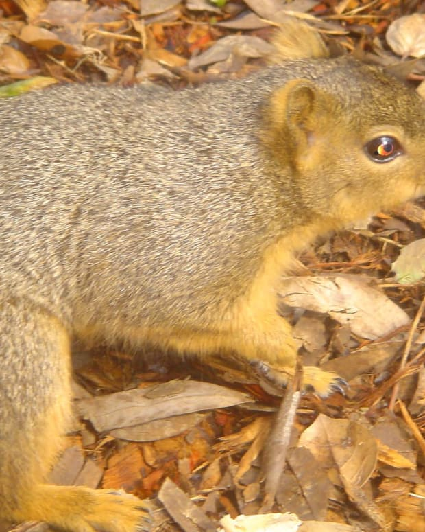 Tip: Leave electronics at home.  Squirrels and mice love nut-sized earbuds from iPods!