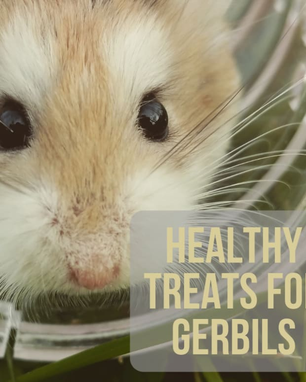 all-about-gerbils-care-for-your-gerbils-diet