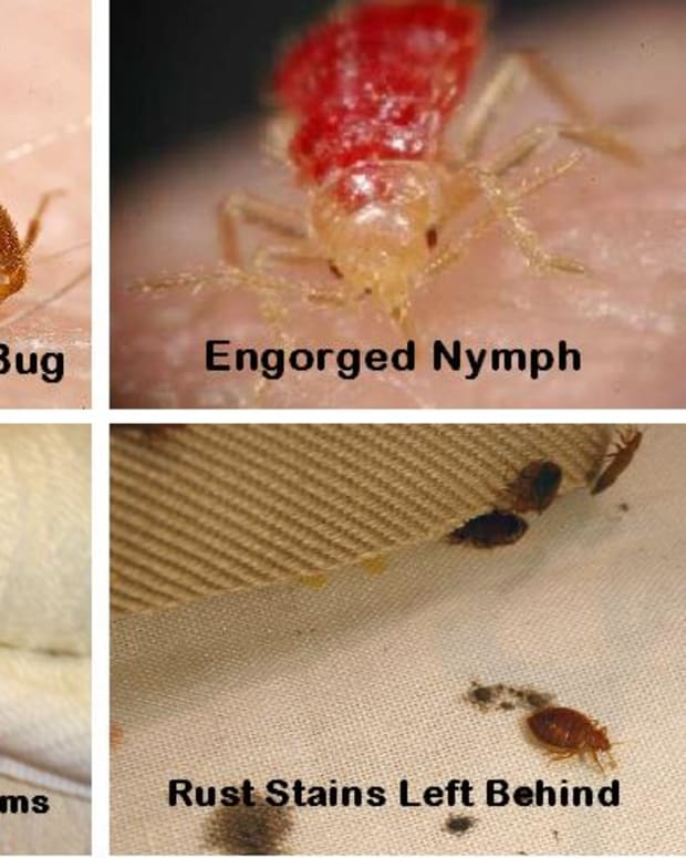 how-to-find-and-get-rid-of-bed-bugs