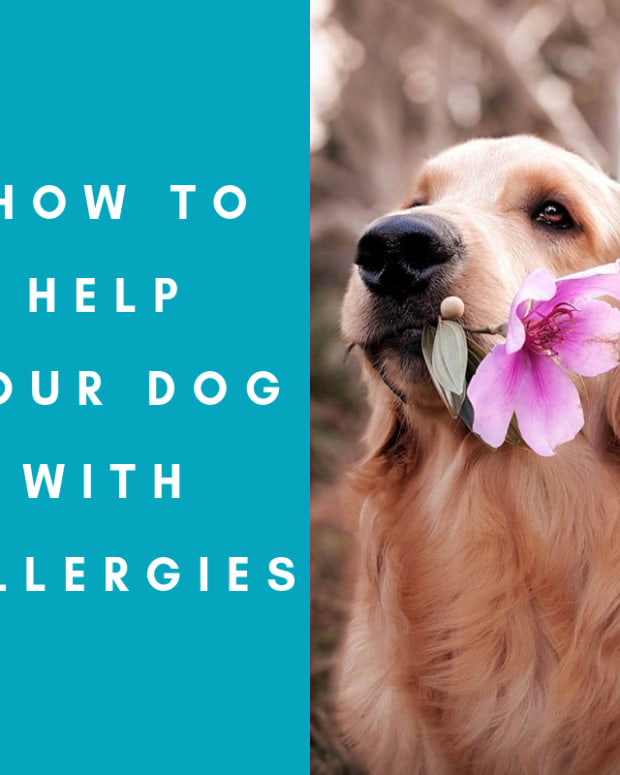 help-my-dog-has-allergies