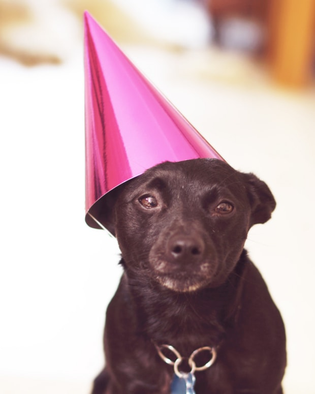 pet-life-expectancy-the-lifespans-of-popular-pets