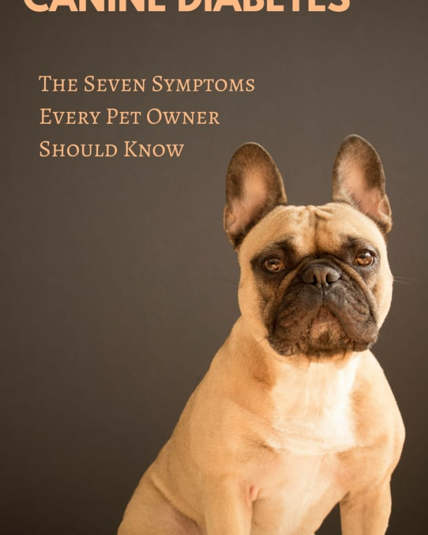 do-you-know-these-seven-symptoms-of-canine-diabetes