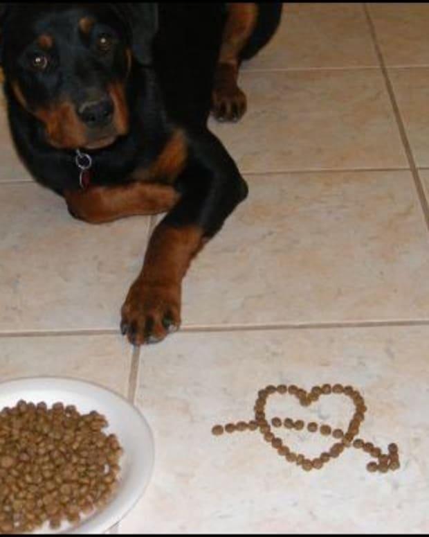 how-to-make-a-dog-food-aggressive