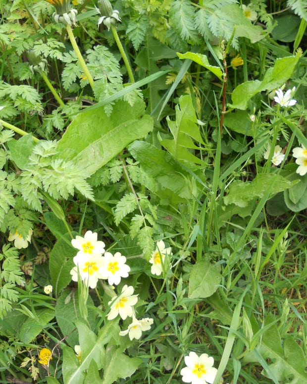 common-wild-flowers-to-find-in-the-dorset-countryside