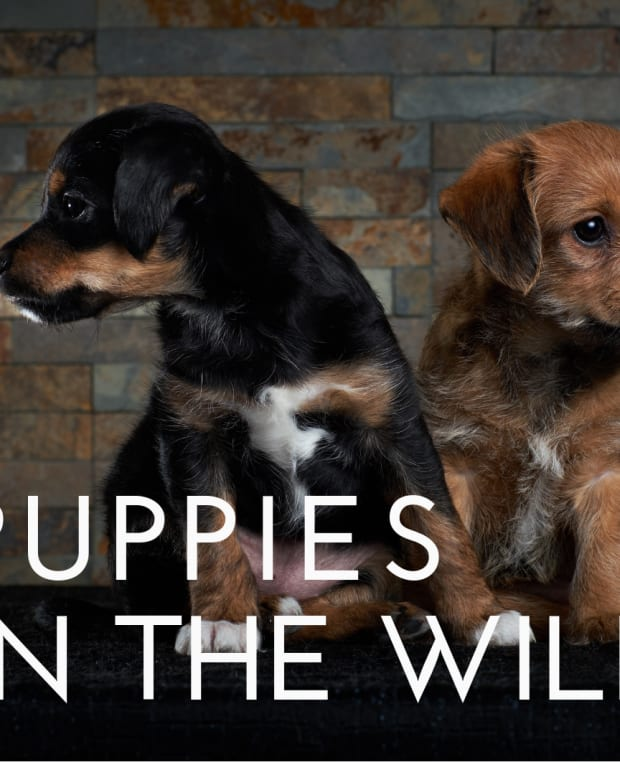 how-puppies-were-raised-in-the-wild