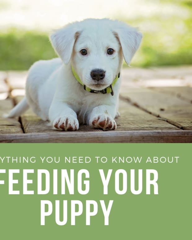 everything-you-need-to-know-about-feeding-a-puppy