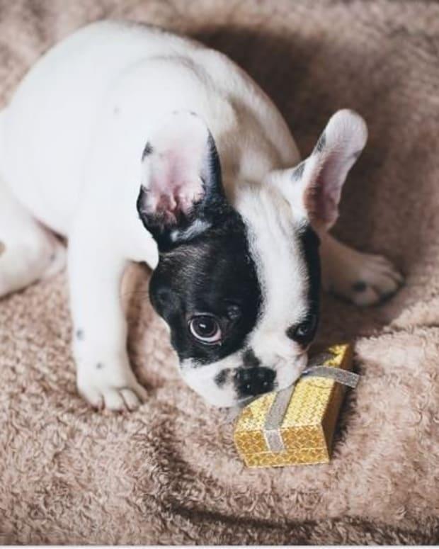 symptoms-of-intestinal-blockage-in-dogs